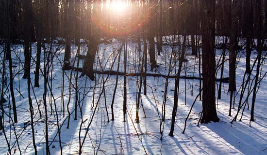 Sunset on Winter Woods