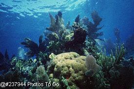 Coral reef scenic, Florida Keys