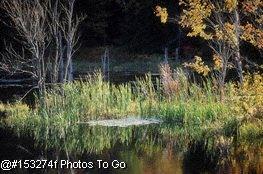 Fall foliage & pond