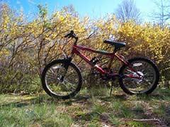 Mountain Bike Medium